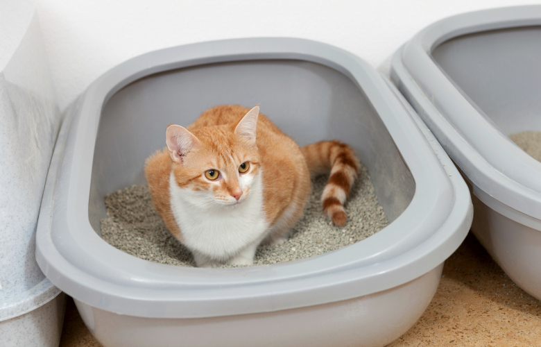 Cat in and out of litter box