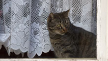 girl cat spayed or neutered