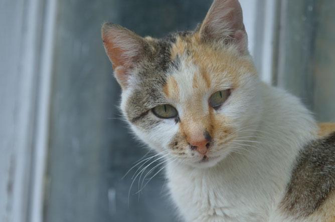 bayou cat arlington