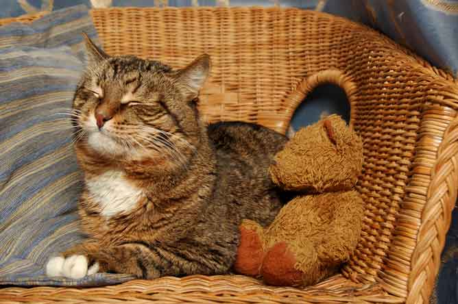 how can i treat a cat with arthritis