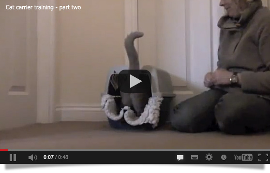 Cat carrier training part two video