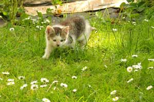 kitten playing in the garden
