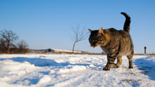 Cats in winter