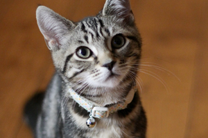 how to train your cat to wear a collar