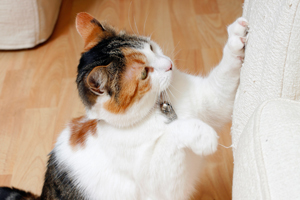 how to stop your cat scratching the couch