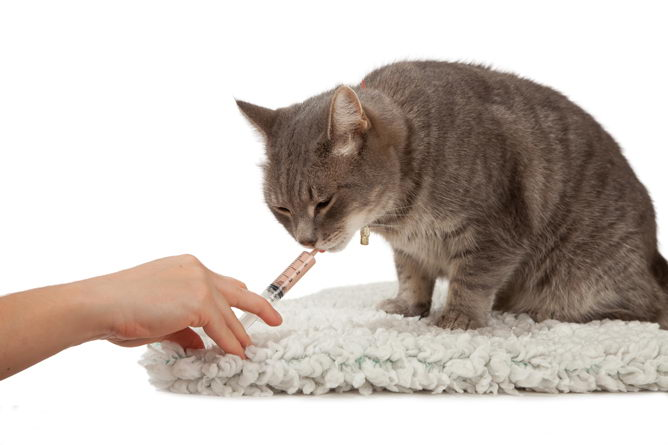 Image result for Cooperating with your cat's veterinarian