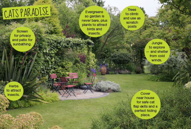 Your Cat Garden ideas for cat owners Neighbourhood Cat Campaign